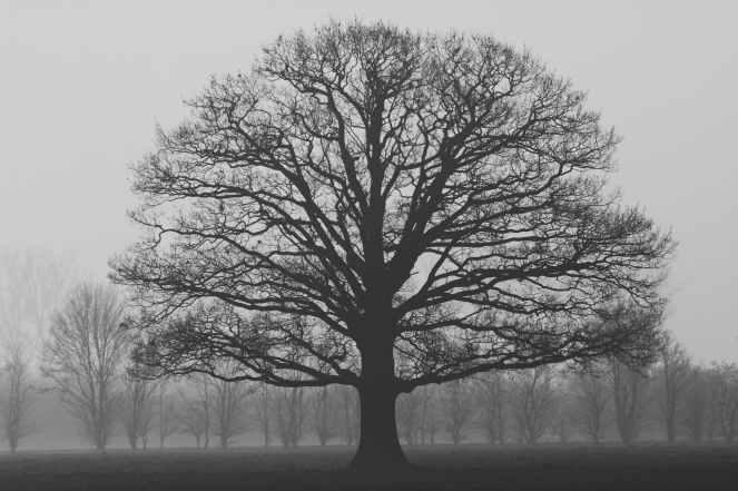alone autumn branch cold